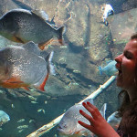 The Georgia Aquarium (Atlanta)