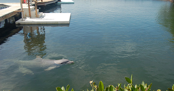 Dolphin Research Center (Marathon)