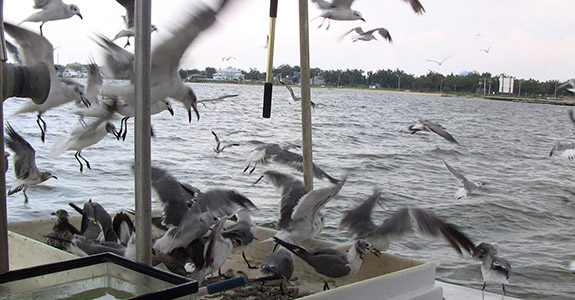 Shrimp Boat Tour (Gulfport)