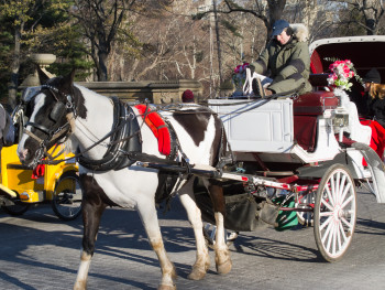 horse_carriage_2