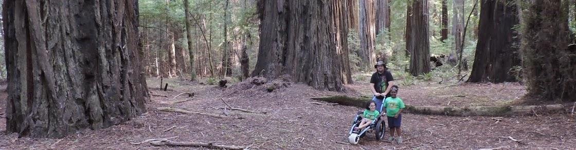 c-k-e-redwoods